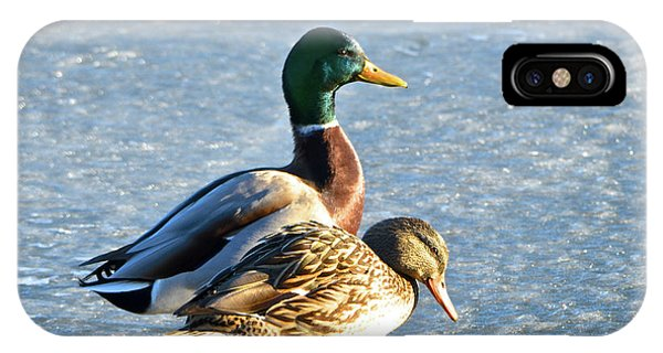 Duck Pair On Frozen Lake IPhone Case