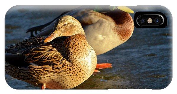 Duck Pair Sunbathing On Frozen Lake IPhone Case
