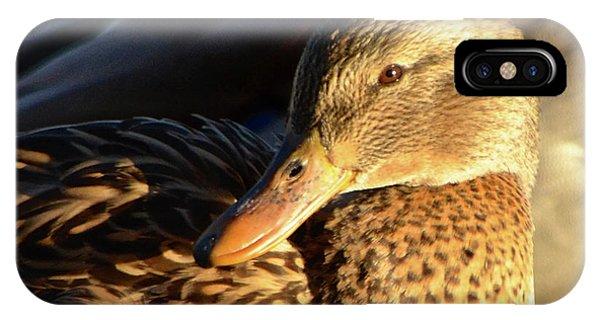 Duck Sunbathing IPhone Case