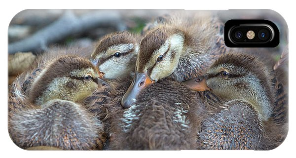 Wood Ducks iPhone Case - Ducklings by Brian Knott Photography