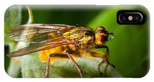 Dung Fly On Leaf IPhone Case