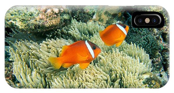 Amphiprion Melanopus iPhone Case - Dusky Clownfish by Dave Fleetham - Printscapes