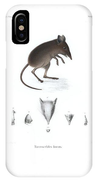 IPhone Case featuring the drawing Dusky Elephant Shrew, Elephantulus Fuscus by J D L Franz Wagner