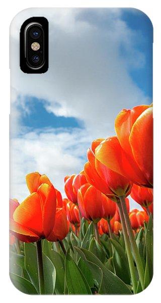 Dutch Tulips Near Keukenhof IPhone Case