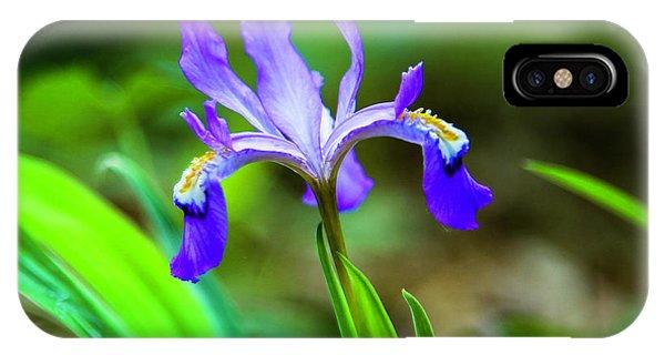 Dwarf Crested Iris IPhone Case