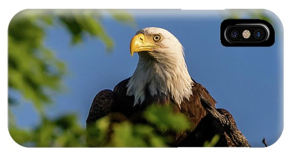 IPhone Case featuring the photograph Eagle Eye by Allin Sorenson