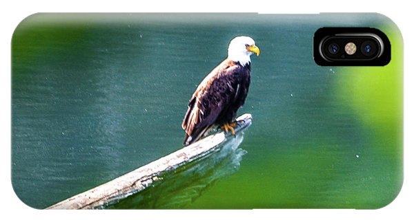 Eagle In Lake IPhone Case