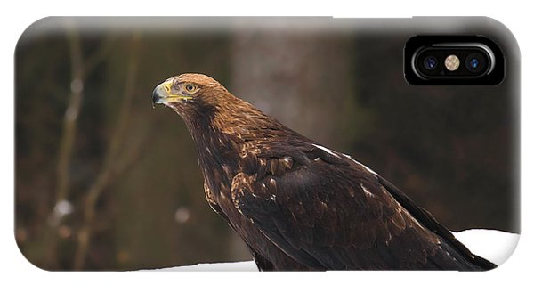 Eagle In The Snow IPhone Case