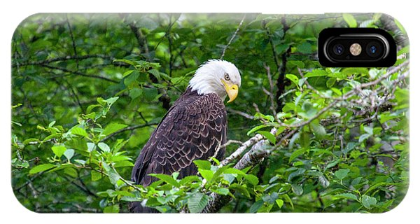 Eagle In The Tree IPhone Case
