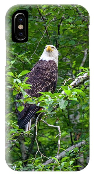 Eagle In Tree IPhone Case