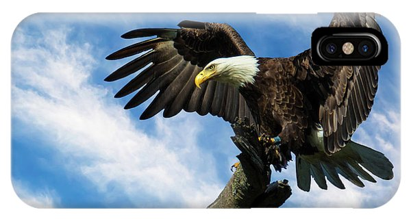Eagle Landing On A Branch IPhone Case
