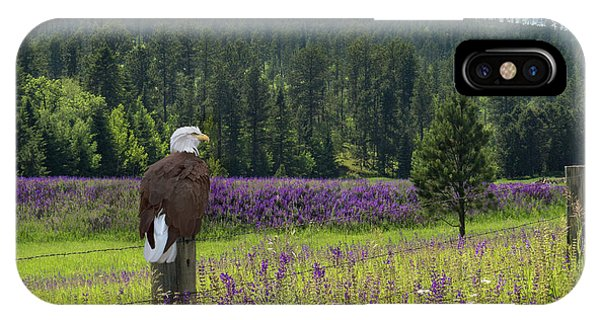 Eagle On Fence Post IPhone Case