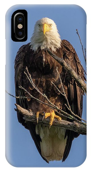 IPhone Case featuring the photograph Eagle Stare by Allin Sorenson