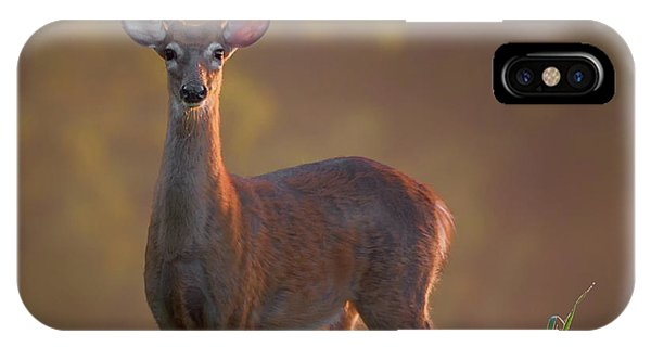 White Tailed Deer iPhone Case - Early Buck by Bill Wakeley