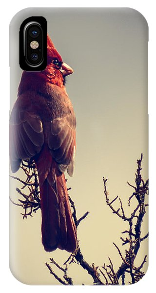 Early Evening Sentinel IPhone Case