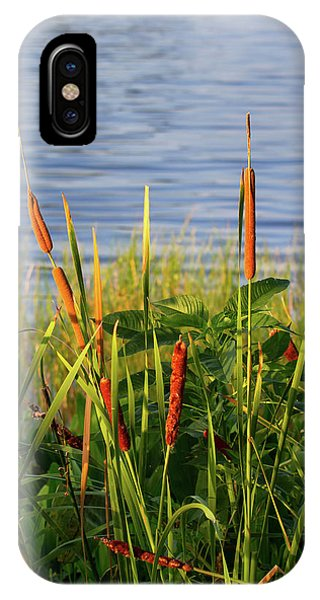 Early Morning Cattails IPhone Case