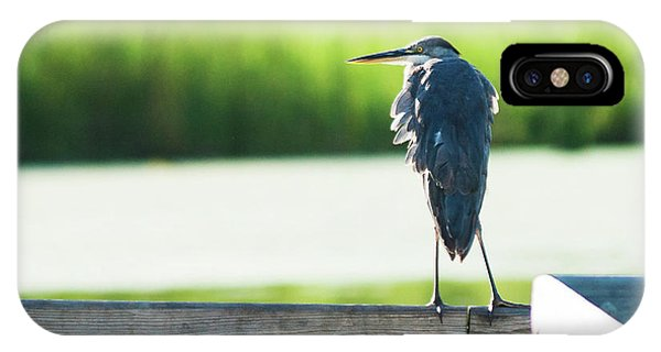 Early Morning Great Blue Heron IPhone Case