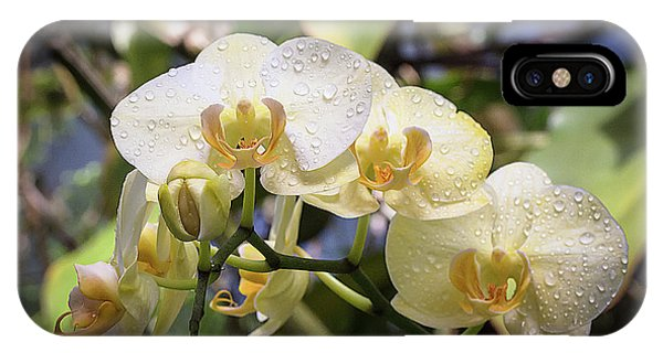 Early Morning Orchids IPhone Case
