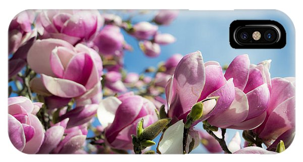 Early Spring Magnolia IPhone Case