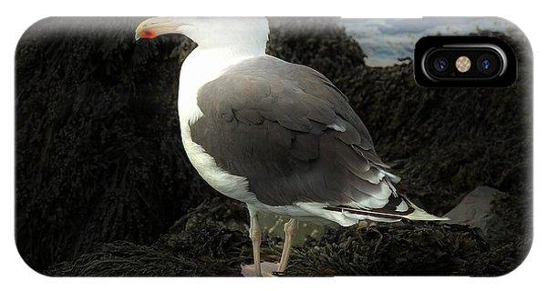 East Coast Herring Seagull IPhone Case