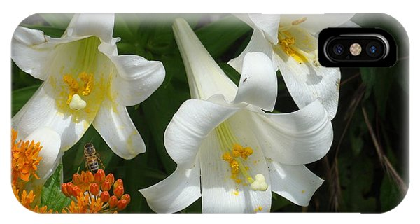 Easter Lilies And Butterfly Weed IPhone Case