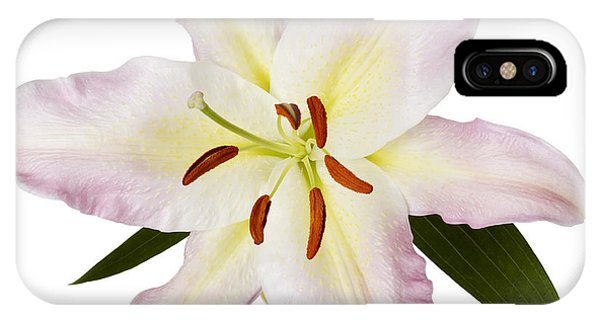 iPhone Case - Easter Lilly 1 by Tony Cordoza