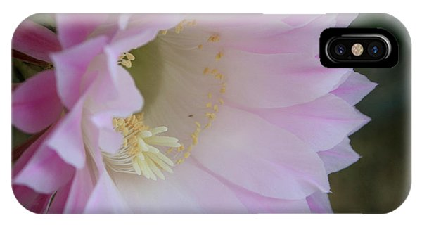 Easter Lily Cactus East IPhone Case