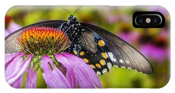 IPhone Case featuring the photograph Eastern Black Swallowtail Butterfly by Ken Barrett