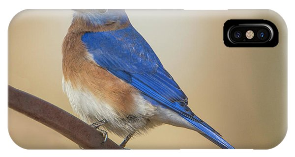 IPhone Case featuring the photograph Eastern Blue Bird Male by David Waldrop