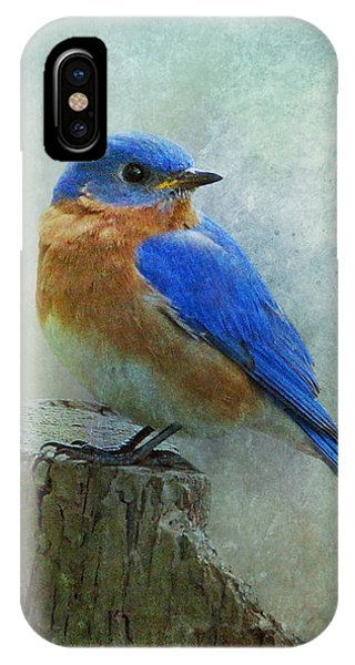 Eastern Bluebird II IPhone Case