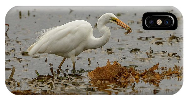 Eastern Great Egret 10 IPhone Case