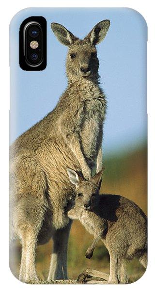 Wilsons Promontory iPhone Case - Eastern Grey Kangaroo And Her Joey by Ingo Arndt