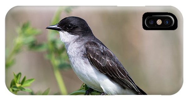 Eastern Kingbird IPhone Case
