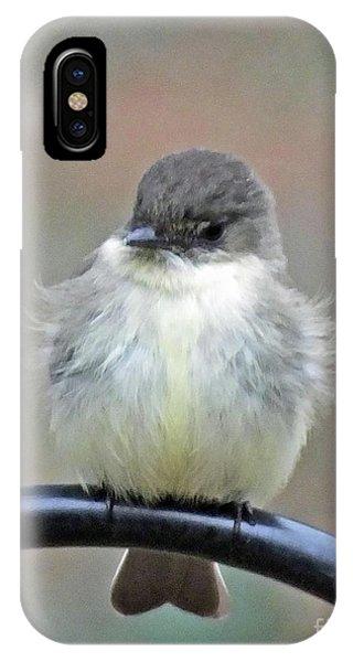 Eastern Phoebe 4 IPhone Case