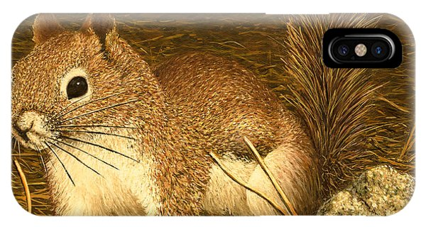 Eastern Pine Squirrel IPhone Case