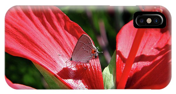 Eastern Tailed Blue Butterfly On Red Flower IPhone Case
