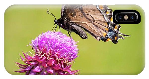Eastern Tiger Swallowtail Dark Form  IPhone Case
