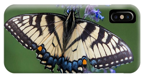 Eastern Tiger Swallowtail Wingspan IPhone Case