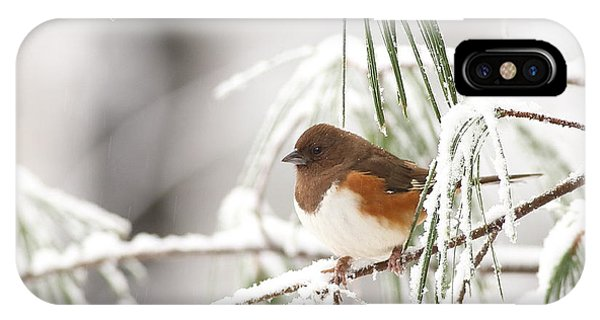 Eastern Towhee In Snowy Pine IPhone Case