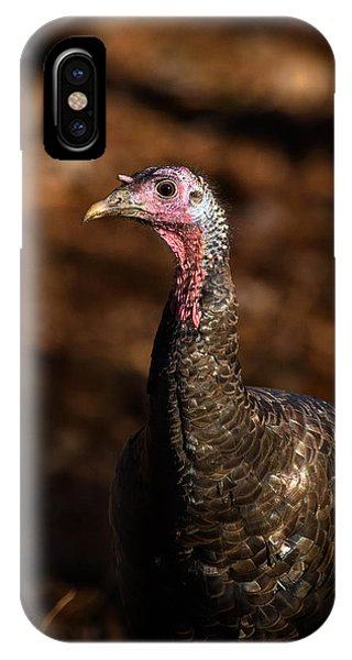 Eastern Wild Turkey 2 IPhone Case