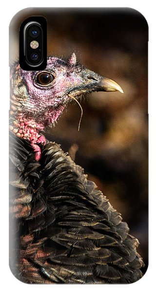 Eastern Wild Turkey IPhone Case