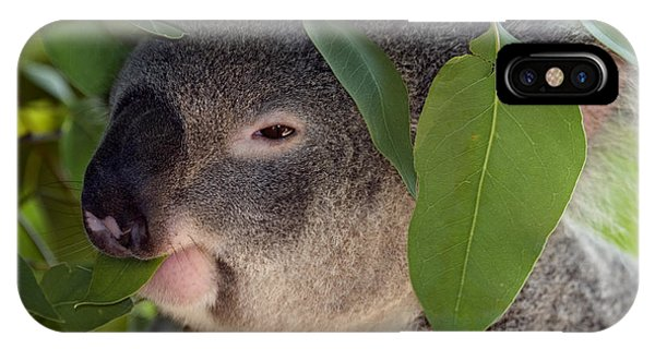 Koala iPhone Case - Eat Your Greens by Mike  Dawson