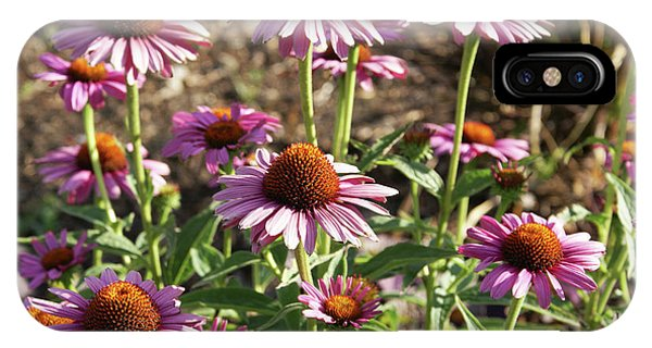 Echinacea IPhone Case