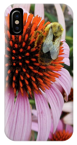 Echinacea Tea Time For Bee IPhone Case