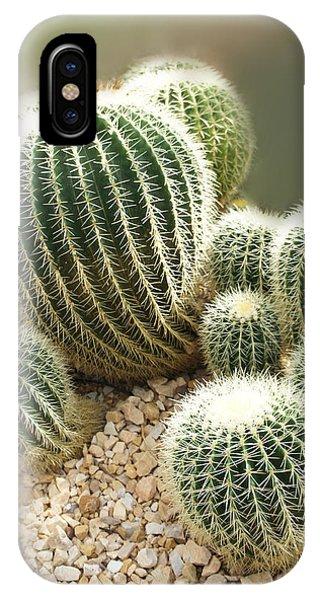 Succulent iPhone Case - Echinocactus Grusonii  by Art Spectrum