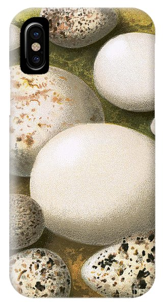 Different iPhone Case - Eggs by English School