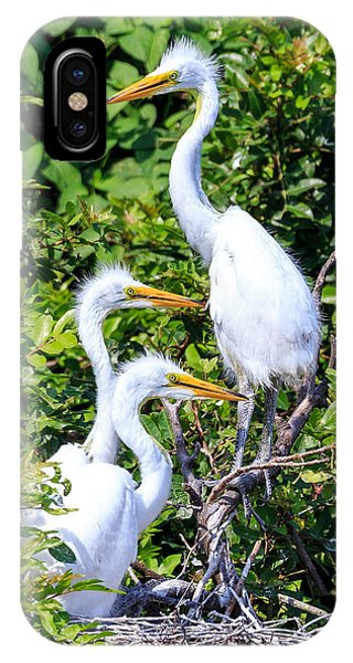 Egret Babies IPhone Case