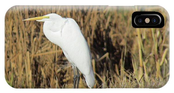 Egret In Grass IPhone Case