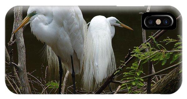 Egrets IPhone Case