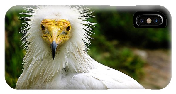 Egyptian Vulture IPhone Case